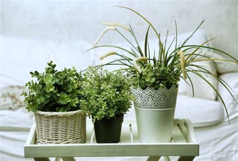 come curare le piante d appartamento come curare le piante d appartamento piante da interno