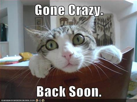Going Crazy Meme - cat gone crazy funny pictures quotes memes jokes
