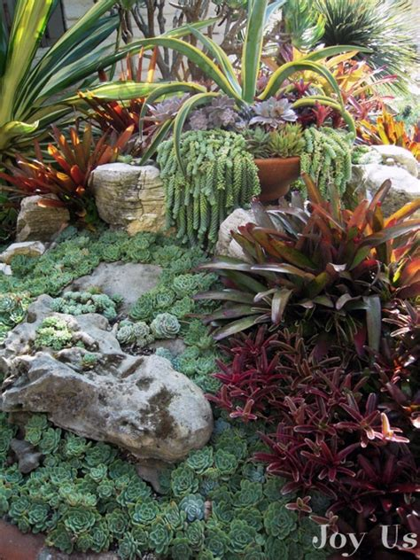 Succulent Garden Layout The Sherman Library And Gardens