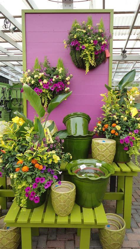 large ruffle edged pot garden center