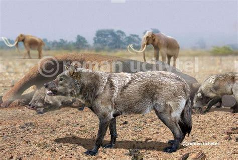 lobo gigante canis dirus wiki prehist 243 rico fandom powered by wikia
