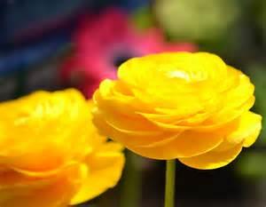 Fall Flower Arrangements 10 Names Of Yellow Flowers Widescreen Wallpapers Hdflowerwallpaper Com