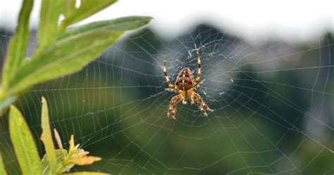 how to keep spiders out of the house keep spiders out of your house and garden with this clever trick starts at 60