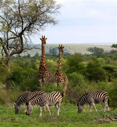 the ultimate romance of africa safari andbeyond kruger national park south africa the place to see every