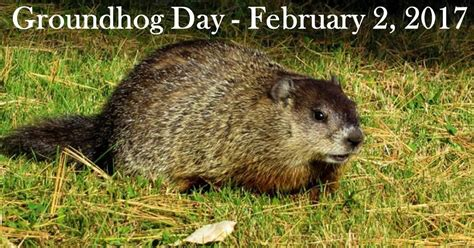 groundhog day pa god s writer homeschooling faith and family
