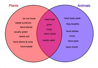 plant vs animal cells venn diagram a well other and the o jays on