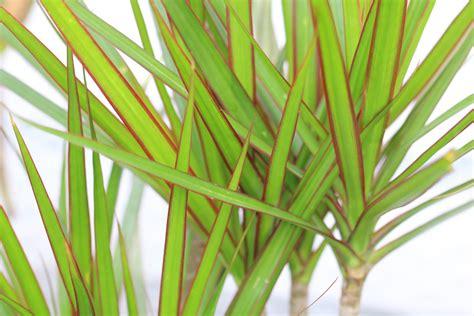 gr npflanzen wohnung best gr 252 npflanzen f 252 r die wohnung gallery