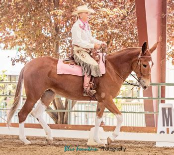 cowboy dressage and competing with kindness as the goal and guiding principle books saskatchewan cowboy dressage