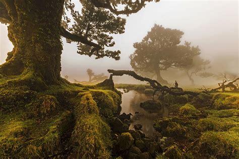 fileo fanal ilha da madeira portugaljpg wikimedia