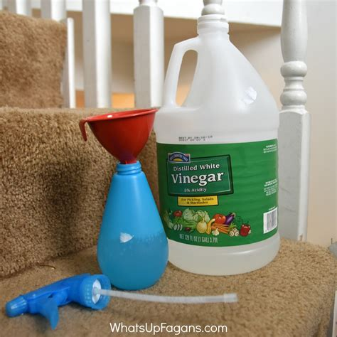 how to get diarrhea out of carpet human urine smell in carpet removal home everydayentropy