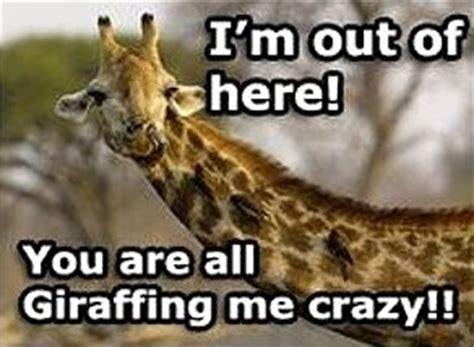 pun jokes images  pinterest funny stuff ha ha