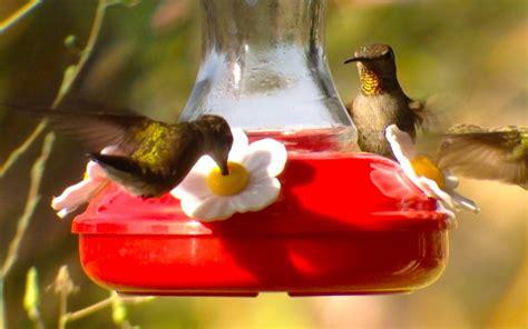 backyard bird shop locations attracting hummingbirds to your backyard phone skope