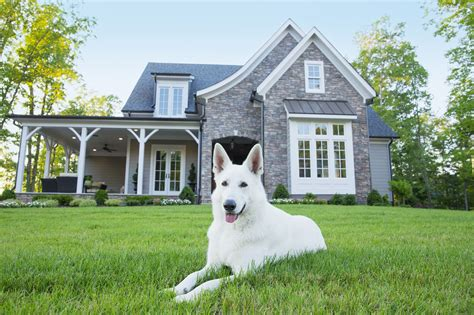 best dog for house 10 best dogs for protection