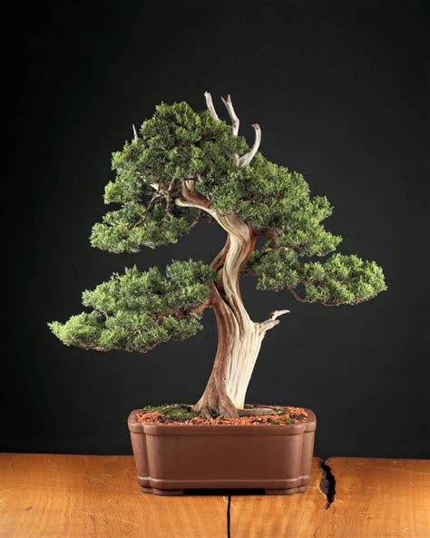 bonsai masterclass all you 1850760934 this brazilian brewer is making beer out of 20 000 bonsai