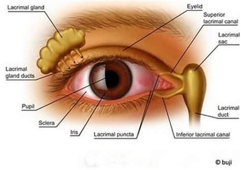 Eye Mate Vitamin Kesehatan Mata bisnis greenworld eye care softgel suplement herbal untuk