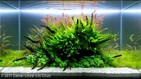 Style Aquascape by The Jungle Style Planted Tank Aquascape Awards