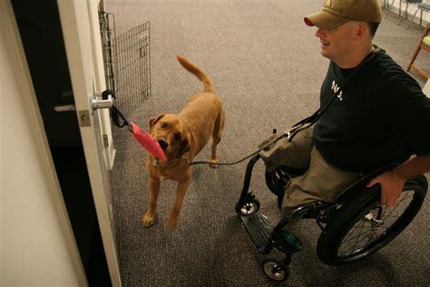 service puppy dos don ts around service dogs