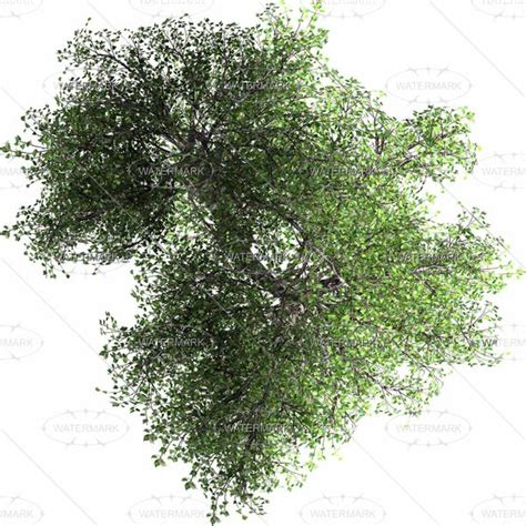24 awesome tree plan view png images progetti da provare pinterest awesome trees and medium