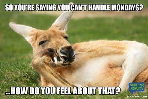 Kangaroo Meme - captain kangaroo quotes quotesgram