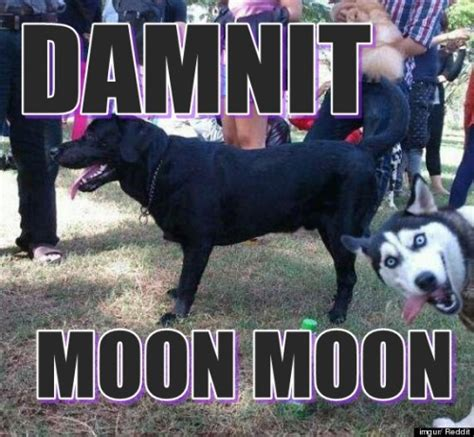 Moon Moon Meme - thread of the wolves page 7 myfitnesspal com