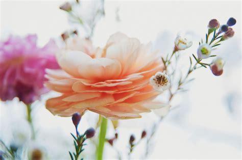 ranuncolo fiore il ranuncolo fiore dal fascino discreto foto pollicegreen
