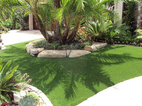 palm trees for backyard pygmy date palm tree front yard landscaping pinterest front yards yards and