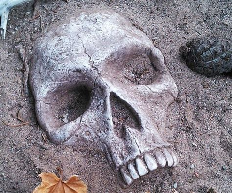 Skull Garden by 17 Best Images About No Soliciting On Home