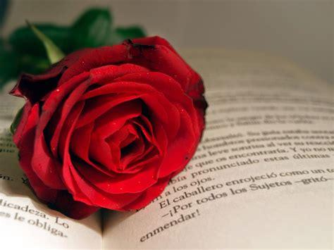 imagenes sant jordi whatsapp quot tamquam tabula rasa quot libros rosas y sant jordi