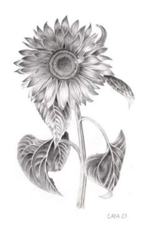 1000 Images About Sunflower Tatoo 2 On Pinterest Black And White Sunflower Shoulder