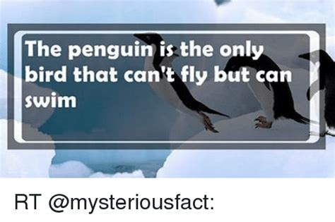 what is the only bird that can fly backwards penguin memes of 2017 on sizzle awkward meme