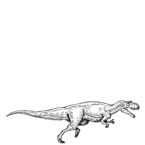 how to draw ceratosaurus