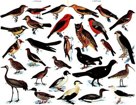list of birds of finland
