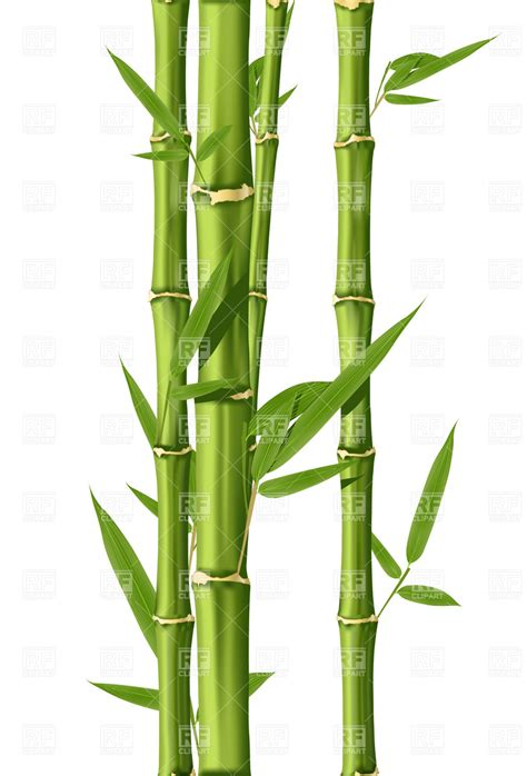 bamboo clip green bamboo stems 4743 plants and animals