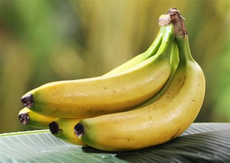 vegetables ok for dogs can dogs eat bananas broccoli peas and other fruits and
