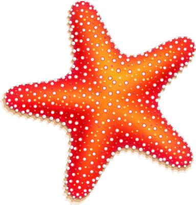 starfish clip orange starfish free clip arts fotor photo