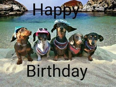 Dachshund Birthday Meme - the 25 best happy birthday dog meme ideas on pinterest