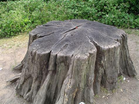 Tree Stump Decorating Ideas Design Ideas For House