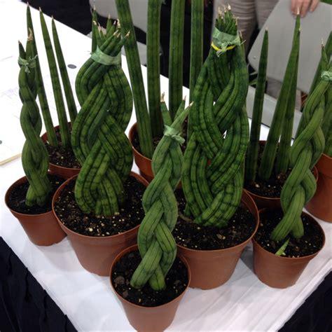Easy Plants by Power Picks Indoor Plants Growit