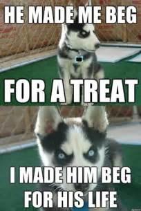 insanity puppy insanity puppy meme memes
