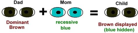 who has the dominant gene for eye color difference between dominant and recessive traits new