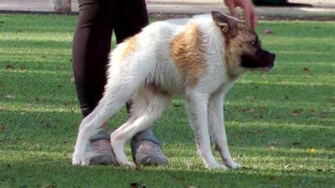 Gamis Haji Tulip amazing animals from around the world photos abc news