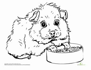 coloring page of a guinea pig guinea pig coloring page craft