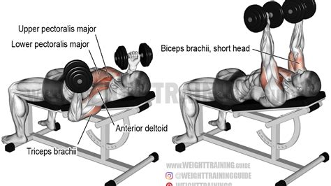 bench press with dumbbells incline reverse grip dumbbell bench press exercise