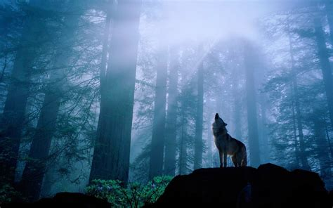 wolf wallpaper pinterest wallpapers for gt howling wolf wallpaper wolfblood
