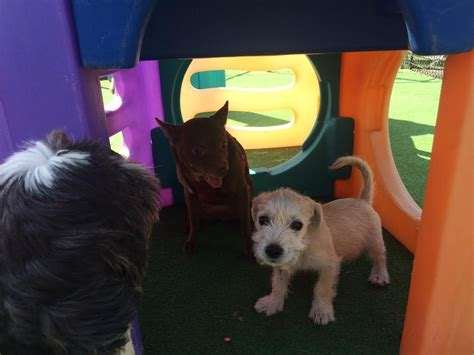boarding prices near me south park doggie daycare and boarding lax westchester lax los angeles