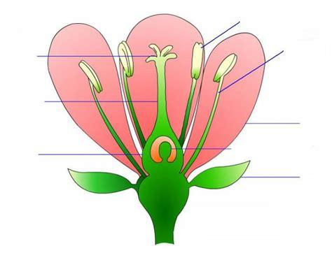 diagram of hibiscus flower parts of a flower purposegames