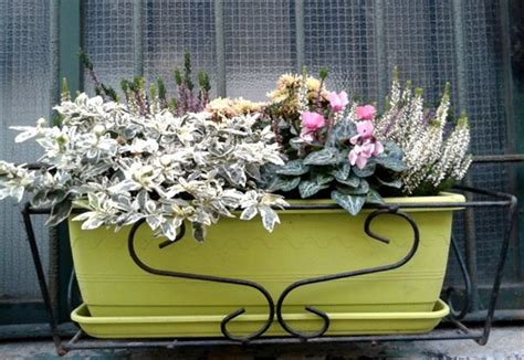 fioriere invernali vrtne ideje slike od 芻lanova slika 81698