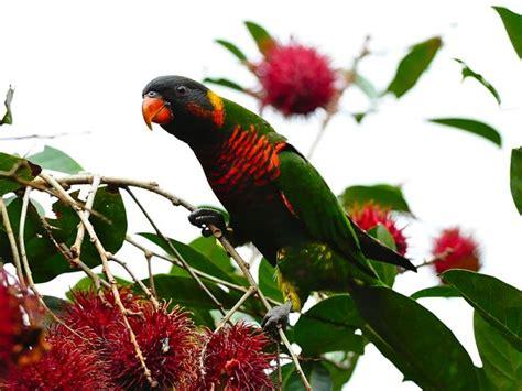 fruit birds birds and fruit related keywords birds and fruit