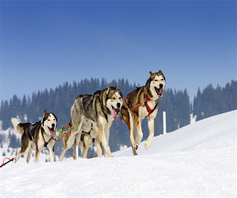 sled commands a guide to mushing in alaska