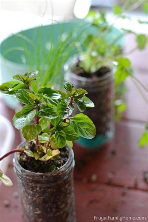 fabulous diy herb garden ideas   perfect